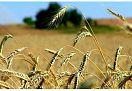 Vendita TERRENO AGRICOLO VICINANZE MONTECCHIO