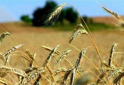 Vendita TERRENO AGRICOLO MONTECCHIO